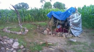 Lovina's children made this campout area in their cornfield this summer.