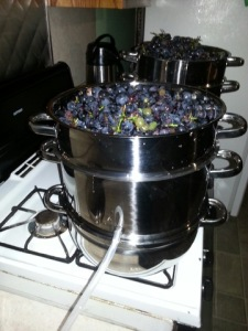 Cooking the grapes to make grape juice.