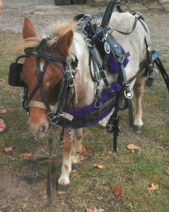 Lovina's daughter Susan is looking forward to warmer weather so that she can train her miniature pony, Prancer.