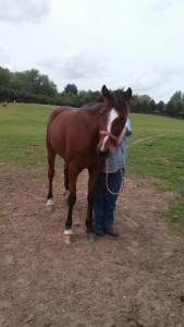 HorseBuggyMighty2015