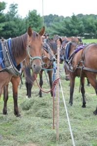 HorsesWaiting