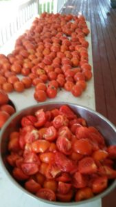 As summer winds down, the Eicher family has been busy picking tomatoes from their family garden.