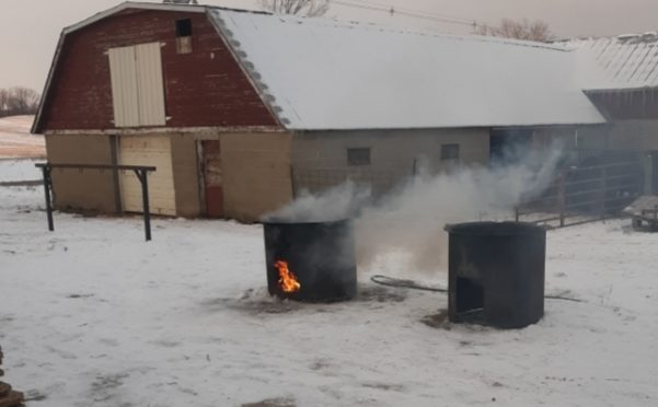 Winter butchering means hard work, a full house, and family fun